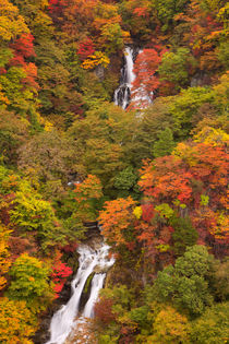 Kirifuri Falls near Nikko, Japan in autumn by Sara Winter