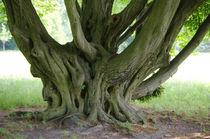 Baum 6 von Bernd Fülle