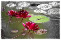 Red Water Lilies von mario-s