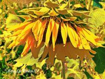The Sunflower Looks Sad  von Mary Lee Parker
