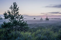 Abendnebel über der Heide auf Rømø, Dänemark von goettlicherfotografieren
