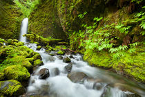 Remote waterfall in lush rainforest, Columbia River Gorge, Oregon, USA von Sara Winter