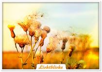 Lichtblicke by imbild-verlag