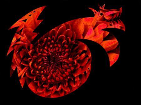 Flowery-dragon-wolf-dot-gr