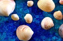 Muscheln auf Glas