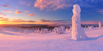 Sunset over frozen trees on a mountain, Levi, Finnish Lapland by Sara Winter