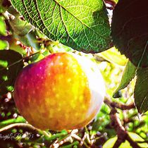 Apple Season by Mary Lee Parker