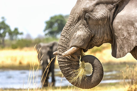 Elephant8867