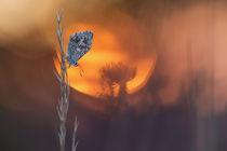 ~ Rising Sun ~ von Henrik Spranz