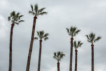 Exotic palms von Salvatore Russolillo