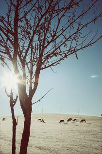 Tree and Cows von Salvatore Russolillo
