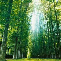 Allee in Versailles. by li-lu