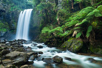 Rainforest waterfalls, Hopetoun Falls, Great Otway NP, Victoria, Australia by Sara Winter