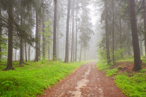 Road through foggy forest in Slovenský Raj in Slovakia by Sara Winter