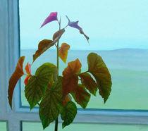 Window von Ilgvars Rauda