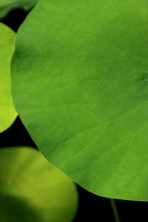 Grün, green leaves von Do Behm