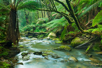 River through lush rainforest in Great Otway NP, Victoria, Australia by Sara Winter