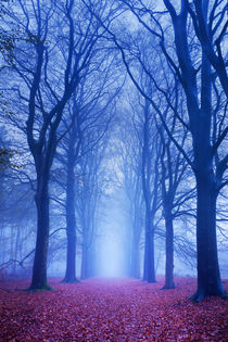 Path in a dark and foggy forest in The Netherlands von Sara Winter