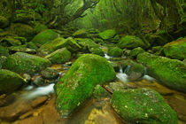 River along Shiratani Unsuikyo rainforest trail on Yakushima Island, Japan by Sara Winter