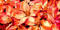 Blütentraum by darlya