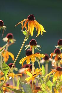 Curious Flower by lisebonne