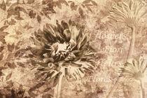 Blumen sepia von darlya