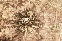 Blumen sepia by darlya