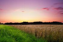 Sonnenuntergang im Feld von Björn Winter