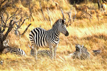 Zebras at Peace von Graham Prentice