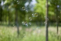 soap bubbles & wood von Rene Kampfer
