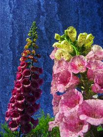 Two Foxglove flowers on texture. von Robert Gipson