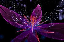 Violetter Lotus von Viktor Peschel