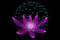 Pinker Lotus von Viktor Peschel