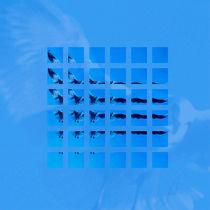 Möwe, wissenschaftlich betrachtet; seagull seen scientifically von Do Behm