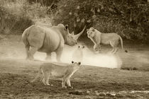Rhino-Lion stale mate by Yolande  van Niekerk