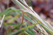Herbstgras von vivorama