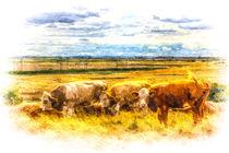 The Friendly Cows Art von David Pyatt