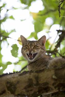 cat high up in tree meow von anja-juli