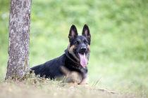 Hund-36