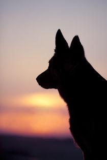 Hund-37