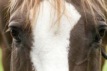 Horses eyes frontal von anja-juli