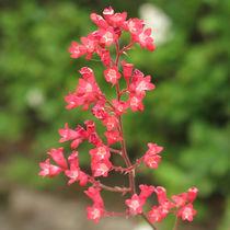 rote Blüten by Sandra Fried