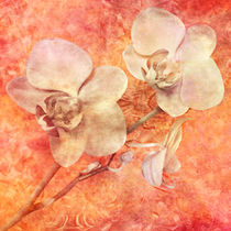 Orchidee, Vintage von darlya