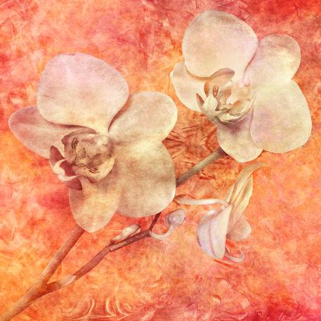 Orchidee-kubismus