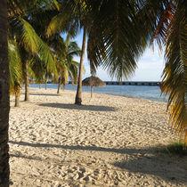 Strand Palme Meer von Sandra Fried