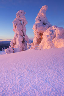 Sunset over frozen trees on a mountain, Levi, Finnish Lapland von Sara Winter