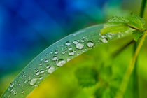 Dewdrops 4808 by Mario Fichtner