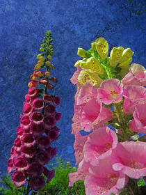 Two Foxglove flowers with textured background von Robert Gipson