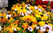 Some Flowers by Philipp Tillmann