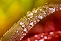 Dewdrops 4825 von Mario Fichtner